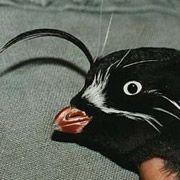У птиц тоже есть чувствительные усики-навигаторы