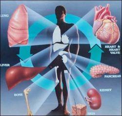 Отныне можно совершить путешествие по человеческим органам