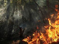 В Северной Осетии горит хвойный лес