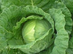Больше всего витаминов содержат зелёные овощи и фрукты