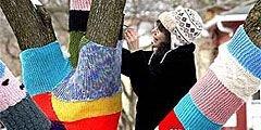 """Деревья в вязаной \""""одежде\"""" - достопримечательность США"""