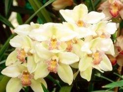 В Мексике с катастрофической скоростью исчезают редкие виды орхидей