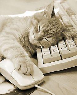 Какие профессии сколько спят
