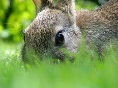 Австрийских водителей пугают зайцами