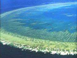 Ученые предполагают, что спасти Большой Барьерный риф помогут рыбы