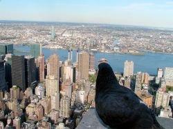 Empire State Building с высоты птичьего полета (фото)
