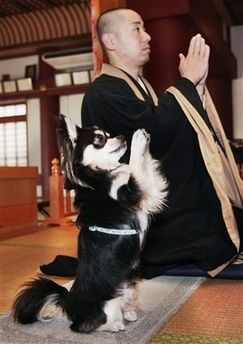 В Японии собака научилась молиться (фото)