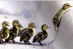 Хотите быть лидером – учитесь договариваться