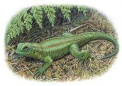 В Японии обнаружены останки самой древней травоядной ящерицы