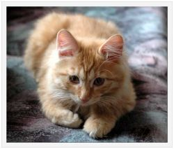 В США кошку перепутали с ядерной бомбой