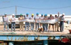Морское чудовище под названием ремень-рыба (фото)