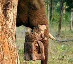 Фотографии диких животных, сделанные слоном (фото)