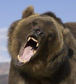 Против медведя баллончик лучше ружья