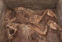 Древние египтяне почитали ослов