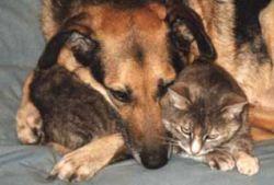 Кошки и собаки заполонили буддисткие монастыри