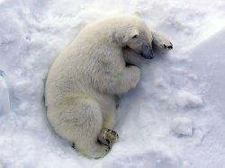Кадры из жизни в Арктике (фото)
