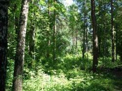 Рослесхоз: лесные аукционы в Подмосковье абсолютно законны