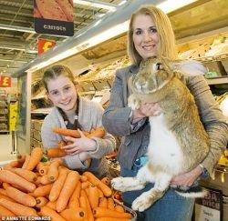 Кролик-гигант весом 22 килограмма (фото)