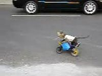 Забавная обезьянка на мотоцикле (видео)