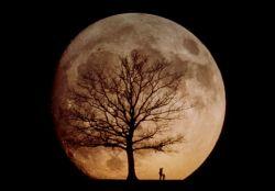 Луну превратят в кладбище