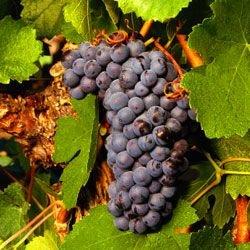 В Португалии появилась гостиница-винотека