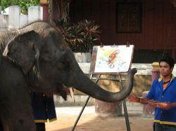 Слон из тайского зоопарка научился рисовать картины (видео)