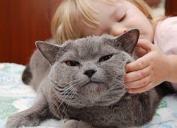 В Швеции обнародованы новые правила отношений между хозяевами и домашними животными