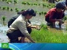 Азия запасается рисом на черный день