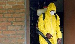 Выявлен природный носитель вируса лихорадки Эбола