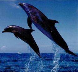 Ученые выяснили, что дельфинам больно быстро плавать