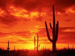 Подборка красивейших рассветов и закатов (фото)