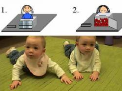 Восьмимесячные младенцы разбираются в статистике