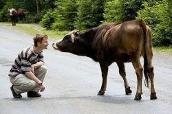 Создан первый гибрид человека и коровы