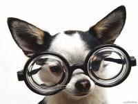 Ученые доказали, что очкарики доброжелательнее тех, кто не носит очков и легче нравятся окружающим