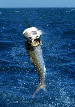 В Иллинойсе летающие рыбы покалечили несколько десятков людей (видео)