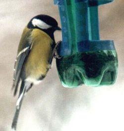 Увлечение людей кормушками вредит птицам