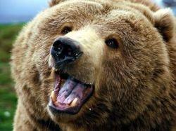Удивительные медвежьи танцы (видео)
