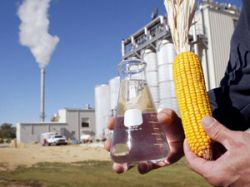 Увеличение производства этанола вызывает рост мертвых зон в морях и океанах