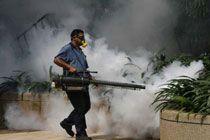 Число заболевших лихорадкой денге в Бразилии превысило 55 тысяч человек