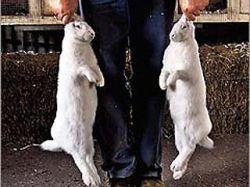 Охотник заплатил 3,5 тысячи евро за то, что убил слишком мало кроликов