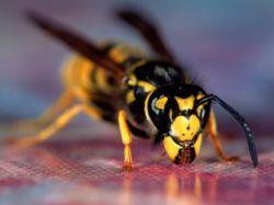 В Японии пчелы искусали марафонцев - 30 человек госпитализированы