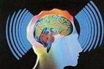 Доказана возможность существования телепатии у высших приматов