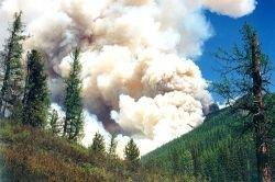 Сибирская тайга охвачена огнем
