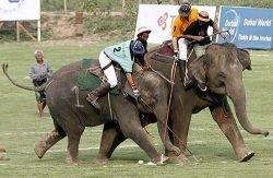Поло на слонах в Таиланде (фото)