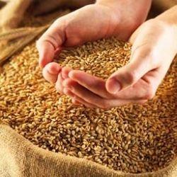 Россия войдет в тройку мировых экспортеров зерна