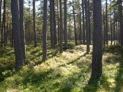 Лесные аукционы в Подмосковье признаны незаконными