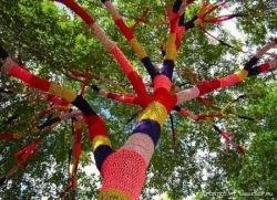 Деревья в вязаной одежде (фото)