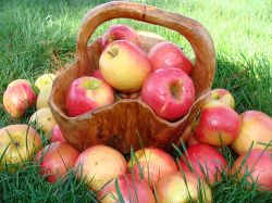 Яблоки уменьшают риск сердечно-сосудистых заболеваний