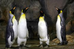 Linux берет курс на бизнес