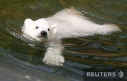 Новые фотографии медвежонка Флоке (фото)